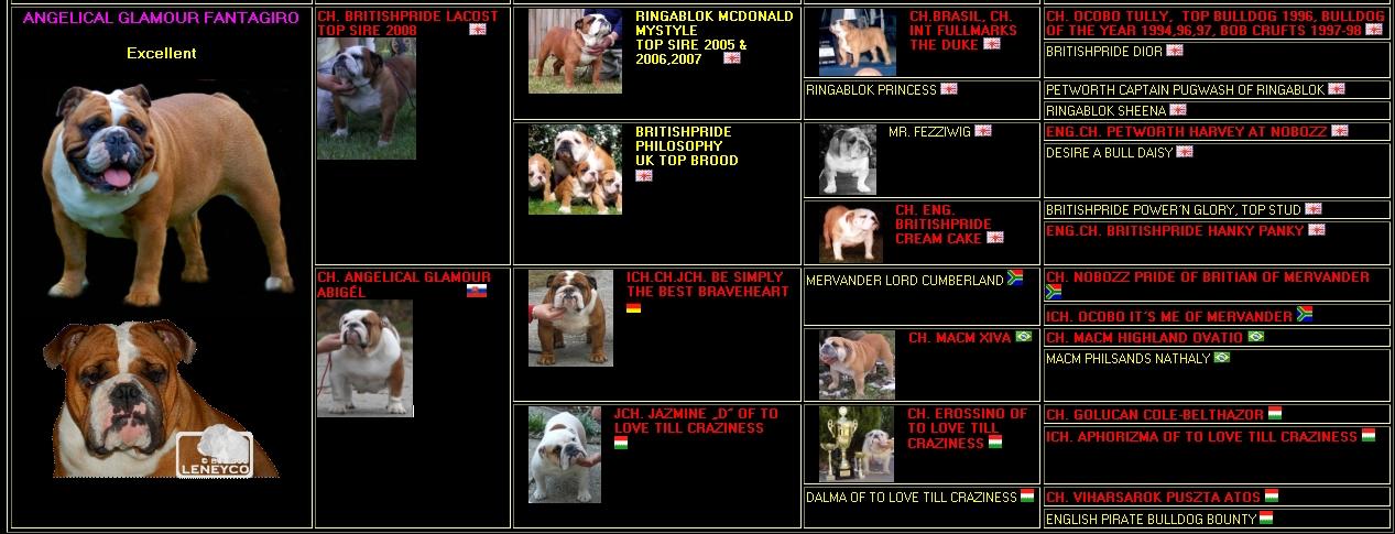 Pedigree Angelical Glamour Fantagiro - Leneyco bulldog