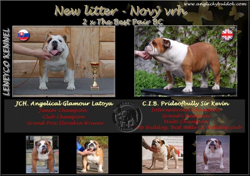 Anglický buldok štěňata Leneyco, bulldog puppies