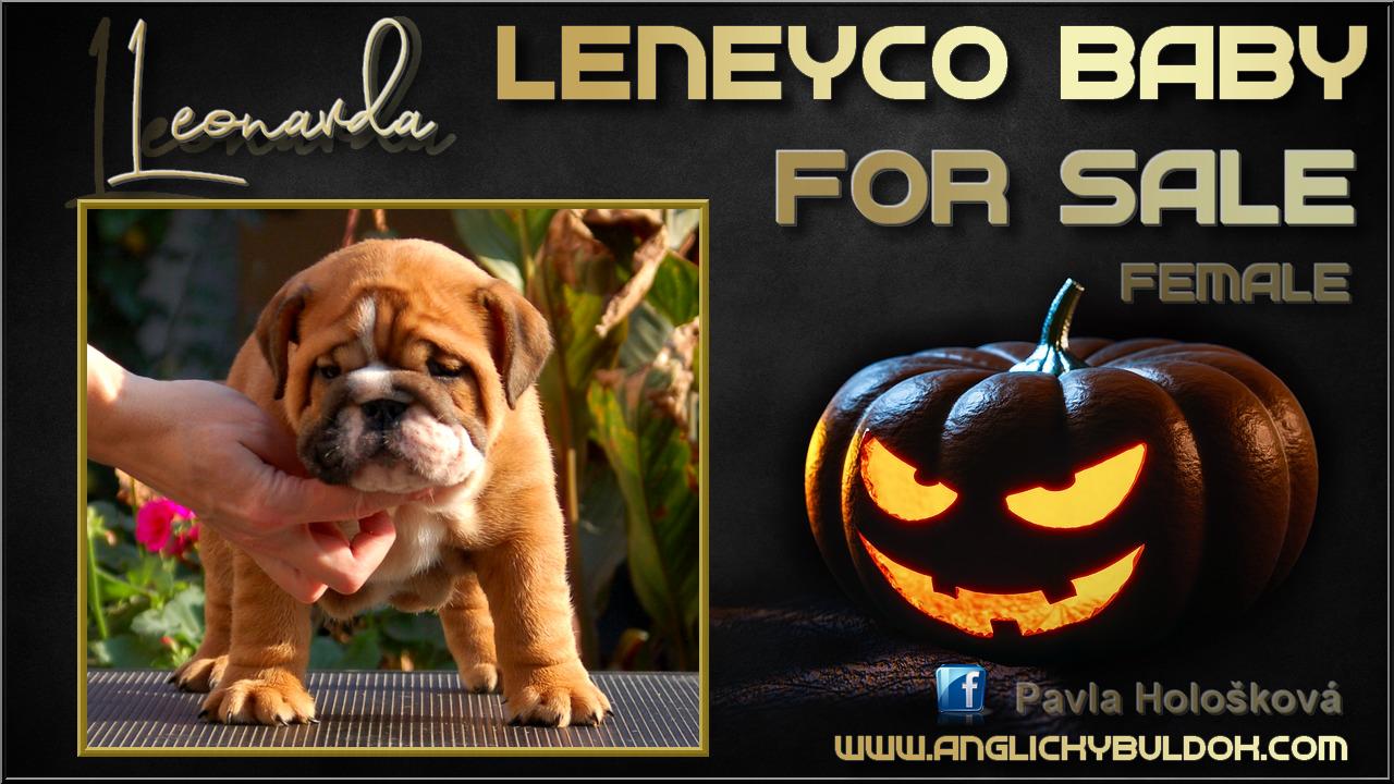Anglický buldok Leneyco štěňátka na prodej, bulldog for sale