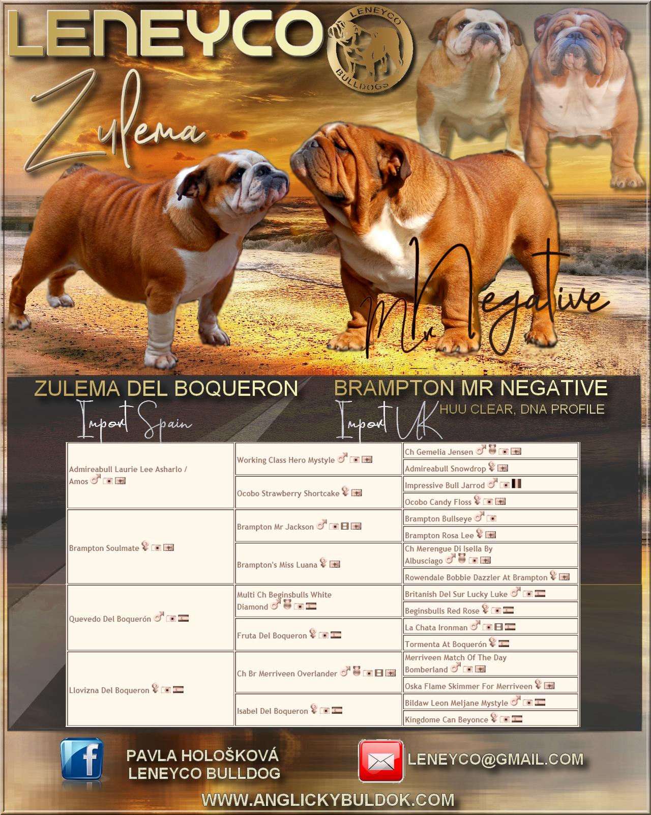 štěňata buldok na prodej bulldog puppies for sale Leneyco